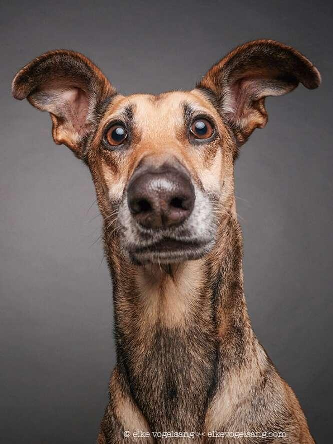 Cães questionando a sanidade do fotógrafo