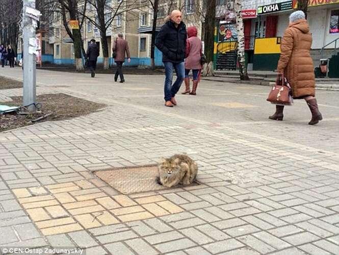 Gato abandonado em tampa de bueiro volta todos os dias ao local à espera de seus donos