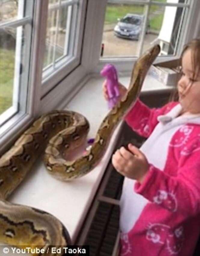 Vídeo chocante mostra menina de três anos brincando e abraçando cobra mortal