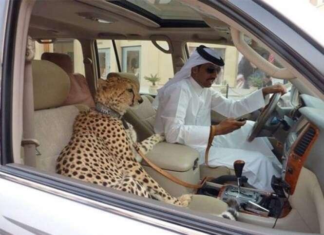 Fotos curiosas envolvendo carros