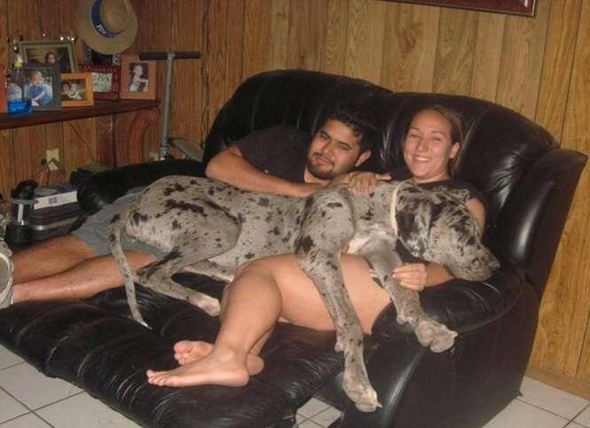 Cães que não sabem o quão grande são