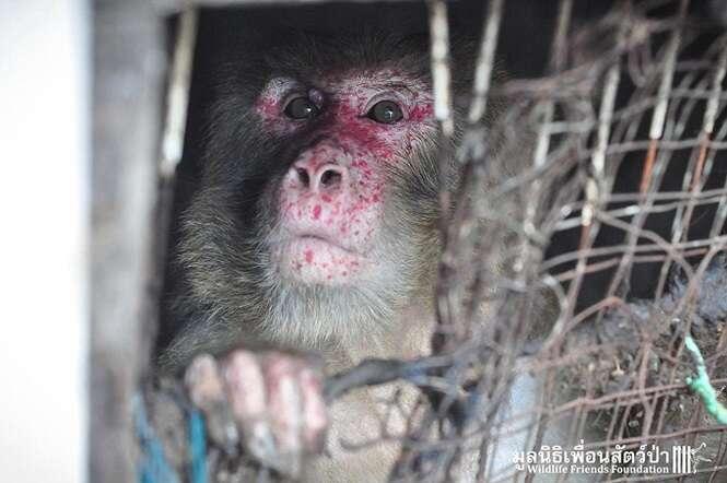 Macaco é resgatado após passar 25 anos preso em gaiola