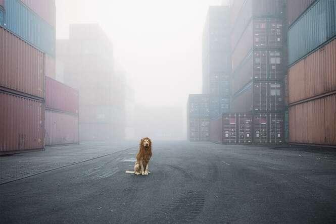 Cãozinho desabrigado encontrado no lixo se torna leão em sessão de fotos