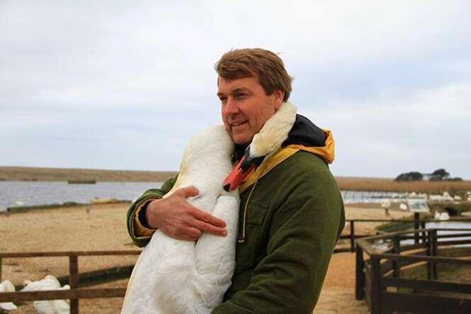 Cisne abraça homem que o salvou e imagem comove internautas