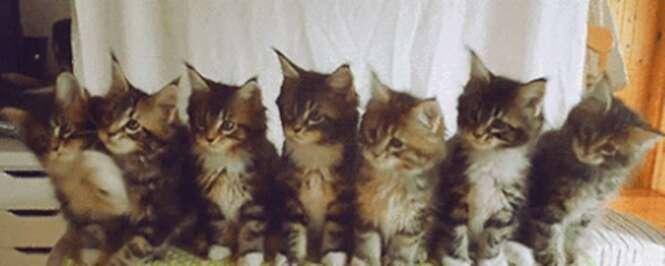 GIFs divertidos envolvendo gatos