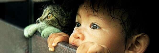 Imagens demonstrando que os gatos podem ser os melhores amigos das crianças