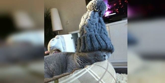 Fotos hilárias de gatos usando algo na cabeça