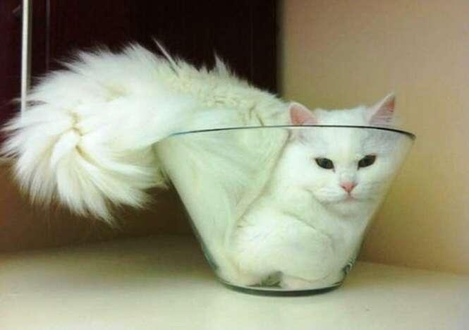 Fotos divertidas envolvendo animais