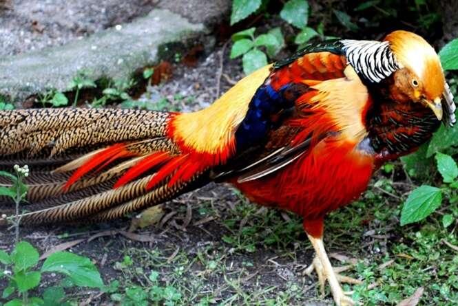 Os animais mais coloridos que existem