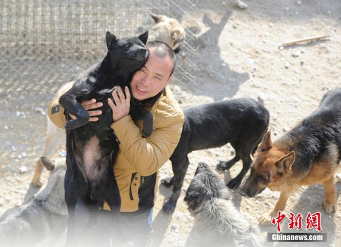 Milionário vai à falência ao construir centro de resgate para cães abandonados