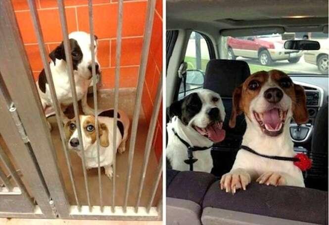 Transformações surpreendentes de cães após serem resgatados