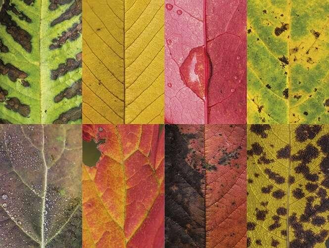 Fotógrafa cria série registrando imagens de folhas para mostrar a beleza de suas imperfeições