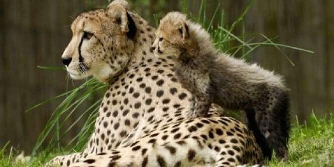 Lindas fotos de animais com seus filhotes