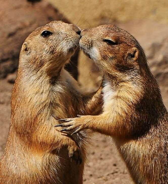 """Imagens adoráveis de animais se """"beijando"""""""