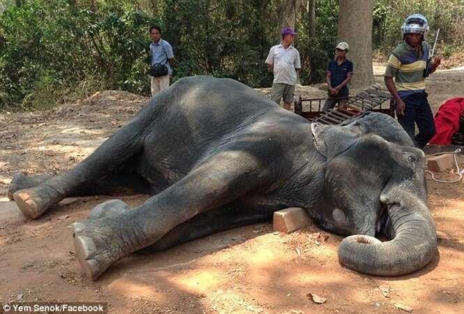 Elefante morre após carregar turistas