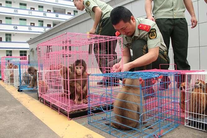 Esposa chama policiais após pensar que estava sendo traída e oficiais encontram 37 macacos em sua casa