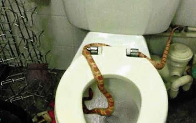 Funcionário leva enorme susto ao encontrar cobra no vaso sanitário de loja onde trabalha