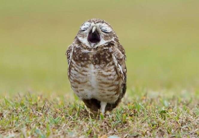 Fotos hilárias de animais registradas no momento perfeito