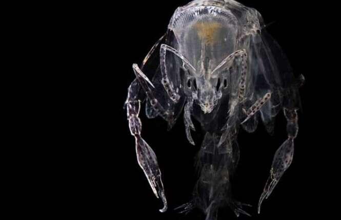 Animais com o corpo transparente