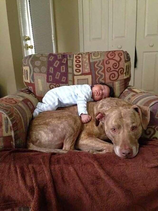 Fotos que farão você comprar um cãozinho para seus filhos