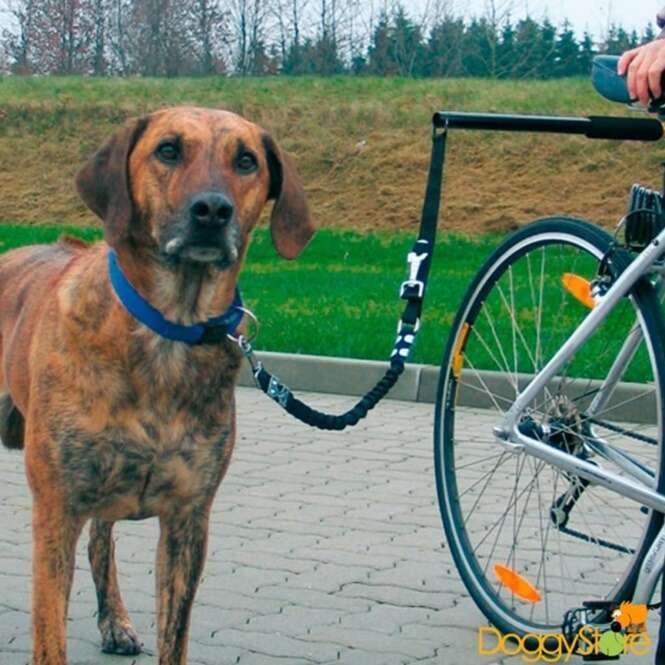 Fotos de cães que adoram praticar esportes com seus donos