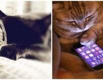 10 imagens mostrando como a tecnologia mudou a vida dos gatos