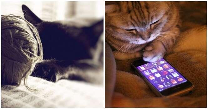 Se você acha que a tecnologia só mudou a vida dos humanos está muito enganado. Ao menos os gatos estão aí para provar o contrário.