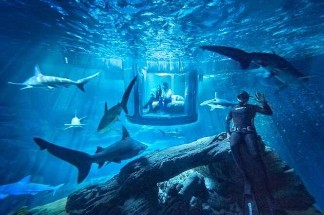 Quarto subaquático permite que você durma cercado por tubarões