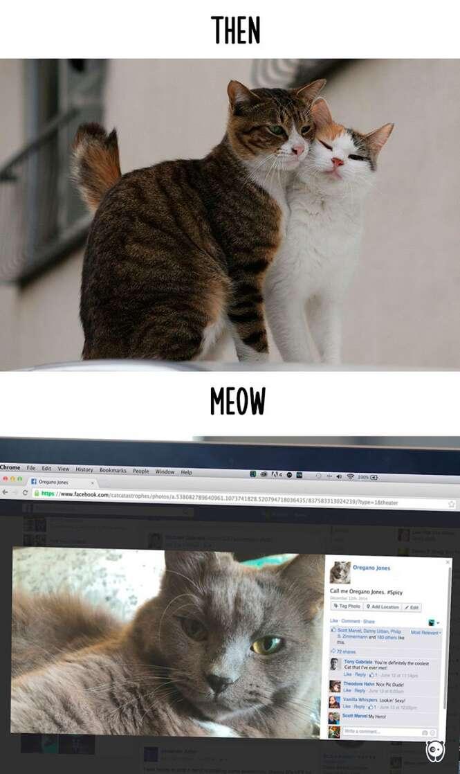 Foto: Cat CATastrophes