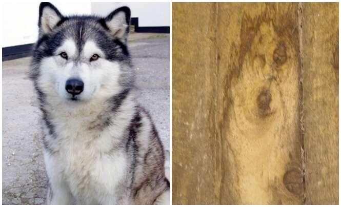 Mulher fica em choque ao ver mancha do rosto de seu cão na parede
