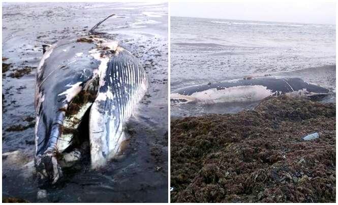 Filhote de baleia encalha em praia e moradores resolvem retirar sua carne