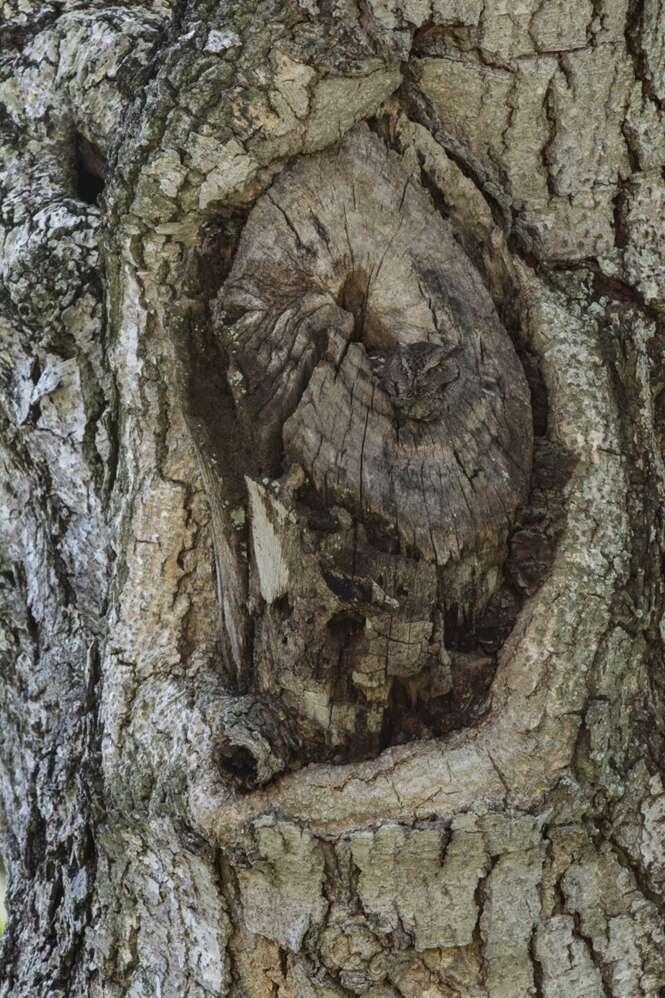 Você consegue identificar o que está escondido neste tronco de árvore?