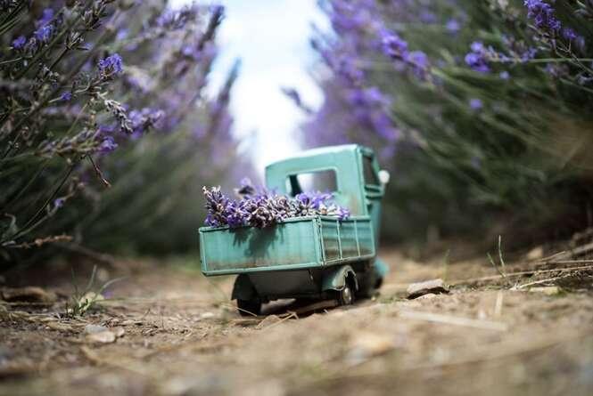 Fotógrafo usa seus carrinhos em miniatura para registrar belas fotos