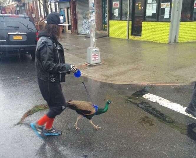 Imagens estranhas encontradas na internet