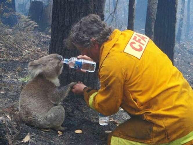 Fotos de bombeiros que arriscaram suas vidas para salvar animais