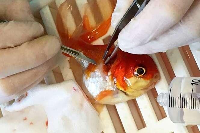 Peixe Nemo viaja 320 quilômetros para remover tumor em operação