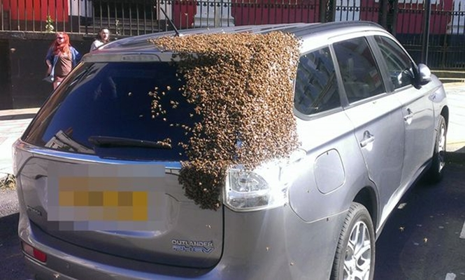 Carro é coberto por abelhas após rainha ficar presa no porta-malas