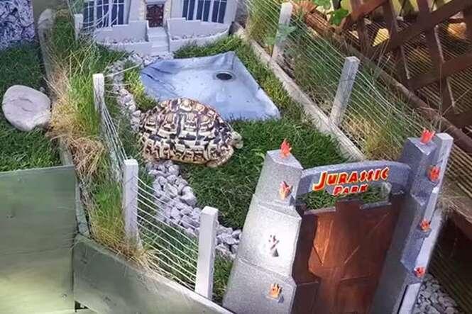 Homem constrói réplica incrível de Jurassic Park para sua tartaruga