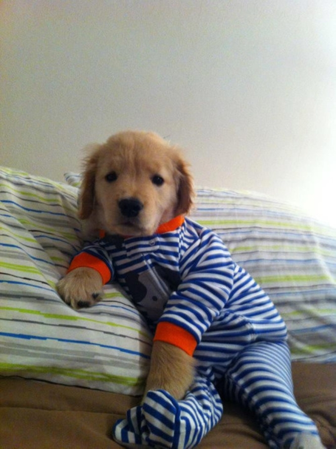 Cães de pijama que vão derreter seu coração