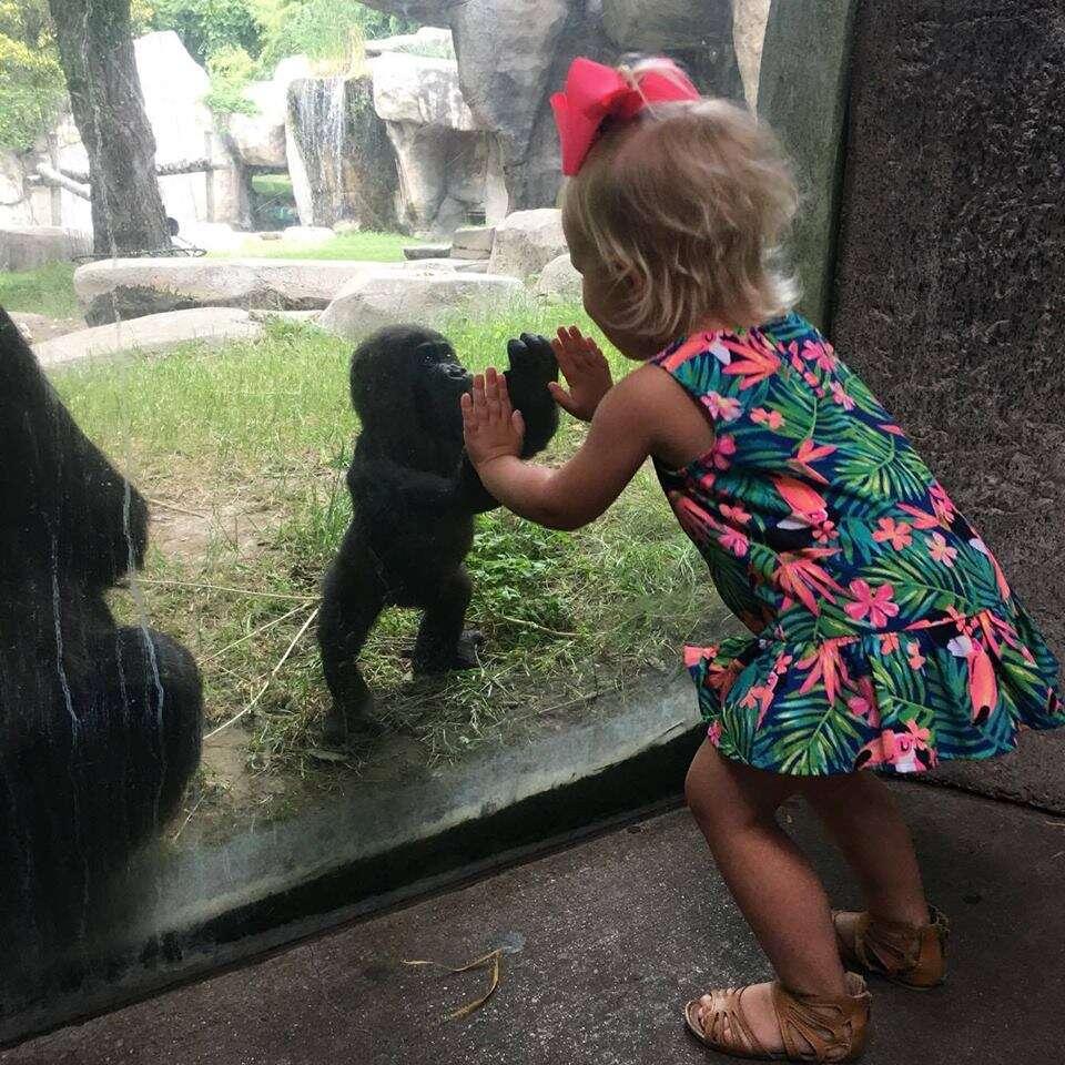 Imagem mágica entre menina de 2 anos e bebê gorila comove internautas