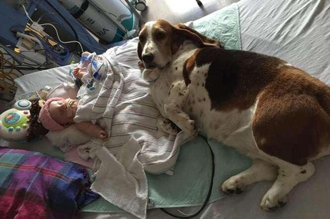 Cão de estimação se recusa sair de perto do bebê que entrou em coma