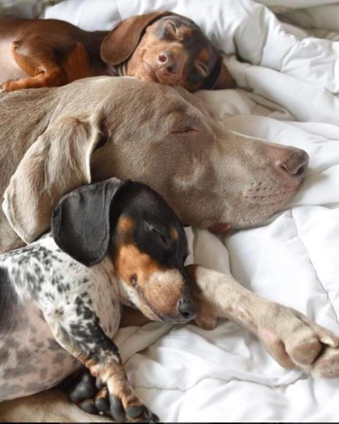 Cães que são amigos inseparáveis