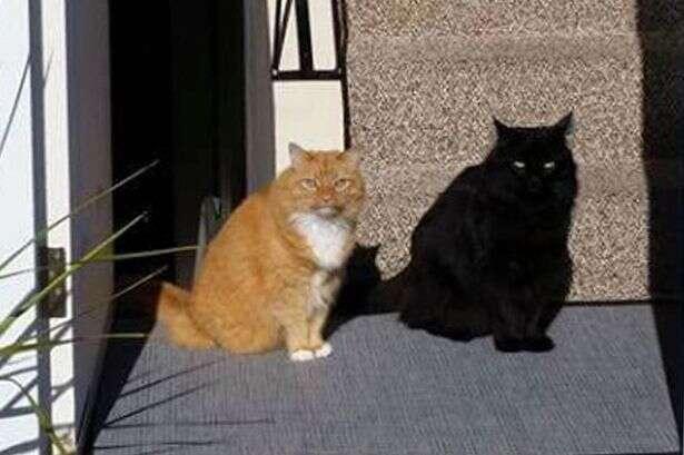 Imagem de gato causa enorme debate na internet