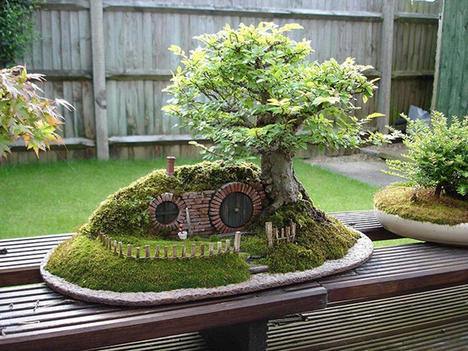 Incríveis árvores Bonsai