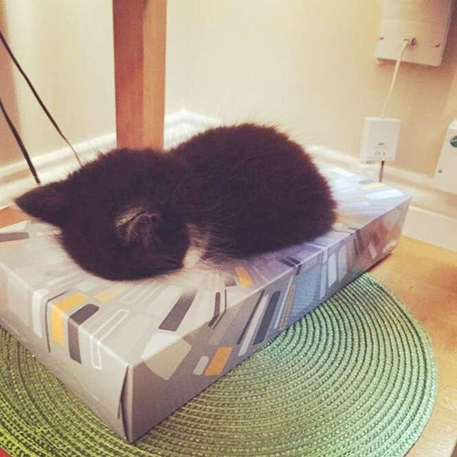 Fotos divertidas de animais dormindo nos locais mais inusitados