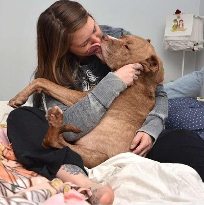 Fotos provando que pit bulls são mais dóceis que você imagina