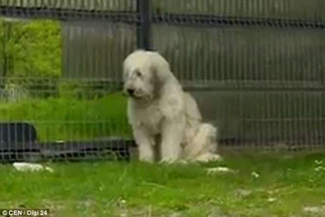 Cão se recusa sair da porta de casa esperando retorno de seu dono