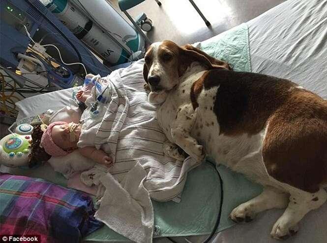 Bebê que vivia com cães de estimação grudados a ele após entrar em coma, morre no hospital