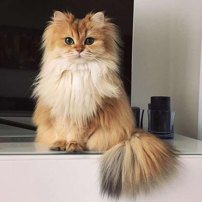 Conheça Smoothie, o gato mais fotogênico do mundo