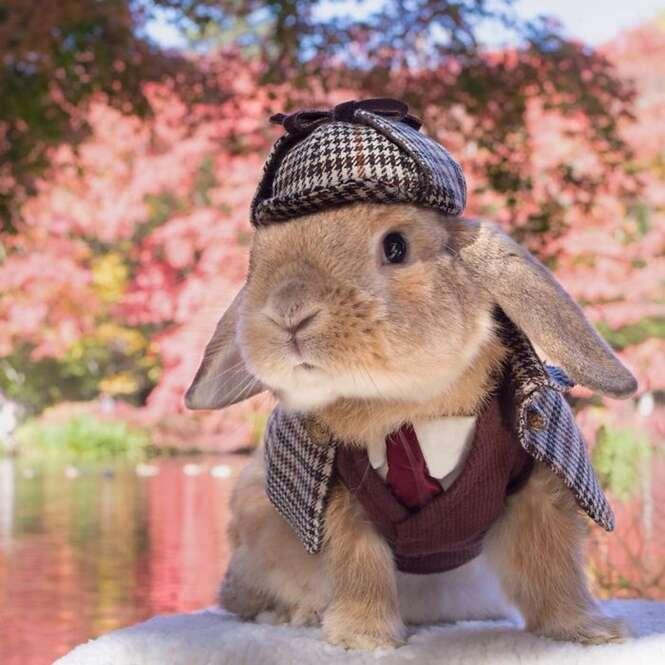 O coelho mais elegante do mundo